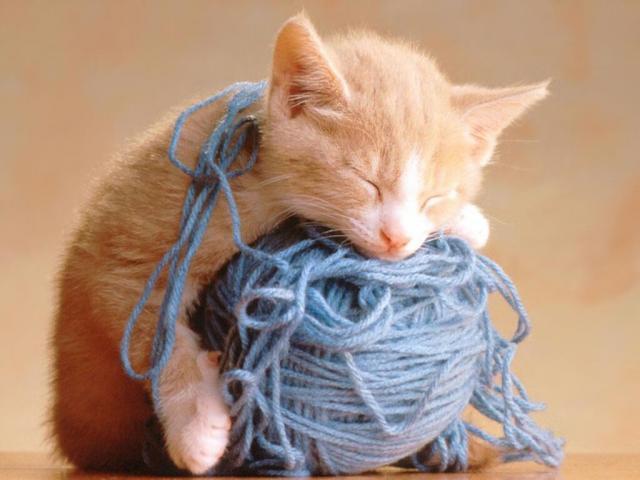 Сонник своего кота играющим