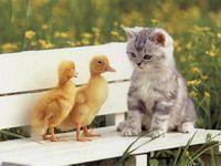 Как понять кошек?